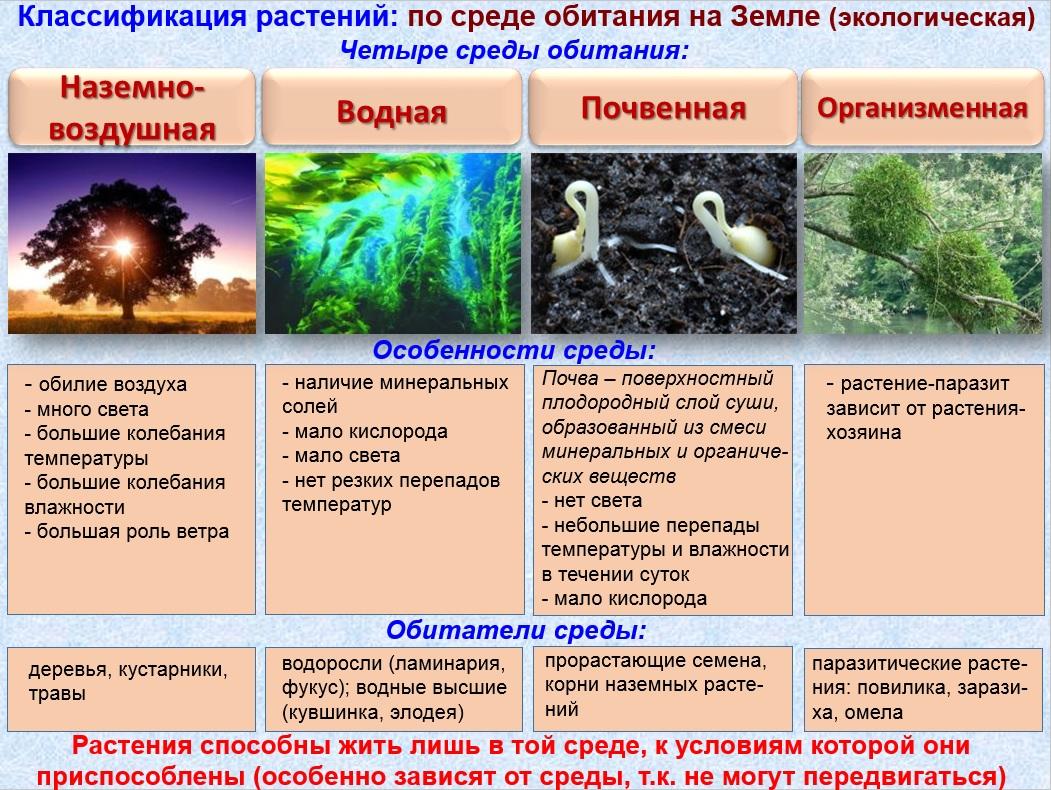Среда обитания животных схема